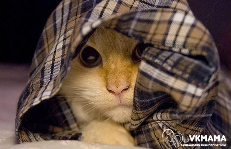 Трусливый кот - женская история - сообщество всех мам